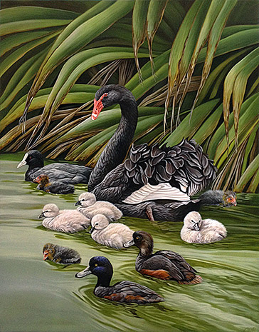 craig platt nz native bird artist, swans
